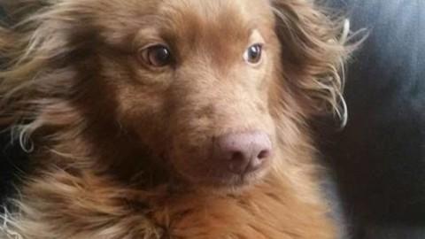 Patentino per proprietari di cani: al via i corsi – Varese News