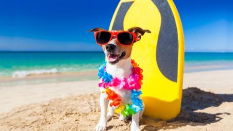 Cani in spiaggia: regole, divieti e permessi – Studio Cataldi