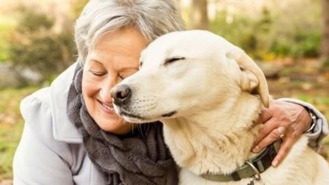 Vivere con un cane o un gatto aiuta 9 anziani su 10 – Il Sole 24 ORE