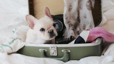 In treno o in aereo, le regole per chi viaggia con il cane – Adnkronos
