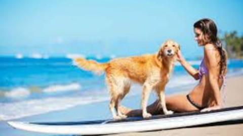 Positano cane in spiaggia morde bambina, arriva la Capitaneria di … – Positanonews