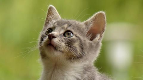 Gatti, perché la loro compagnia fa bene alla salute – Salute24 – Il Sole 24 Ore