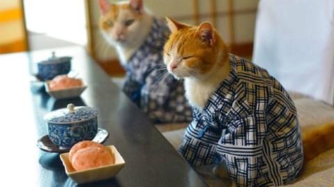 Nei cat hotel giapponesi la regola è «non disturbare il felino» – Il Sole 24 ORE