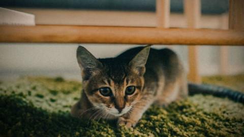Gatti: 7 posti dove amano nascondersi – GreenStyle