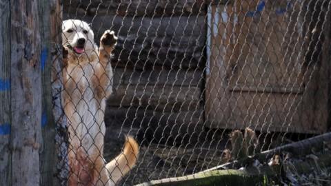 Cani e gatti in vacanza: i consigli del veterinario e di chi li ospita in … – Sky Tg24