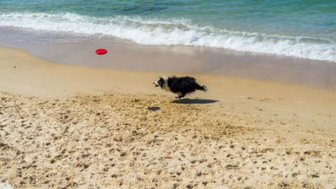 Cani: i giochi estivi più divertenti – GreenStyle