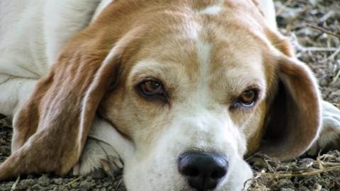 La vecchiaia nel cane: come aiutare e proteggere Fido dai dolori – Solocane.it (Comunicati Stampa) (Blog)