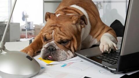 Permesso retribuito se adotti un cucciolo. Negli Usa arriva il … – Yahoo Notizie