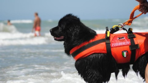 Estate: Sics, 400 cani 'eroi' su spiagge – ANSA.it