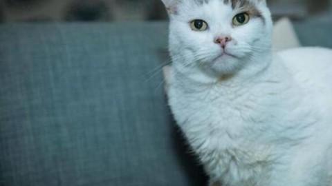 Theo, Gatto dell'anno così salvò la sua padroncina – Corriere della Sera