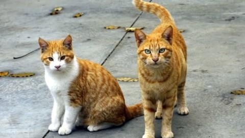 """Montefranco: """"Siamo invasi dai gatti"""", l'Asl risponde: """"Troppo pochi … – TerniToday"""