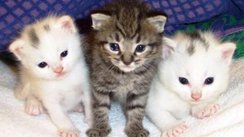 """Killer dei gatti, l'Enpa replica all'indagata: """"Nostra denuncia basata … – BergamoNews.it"""