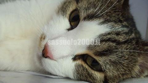 Il Comune di Maranello dice no al database felino – Sassuolo 2000