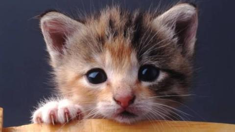Giornata Mondiale del Gatto, ecco 5 consigli per vivere bene con il … – Il Faro Online