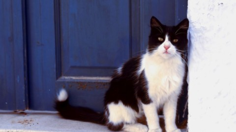 Grecia, cercasi accarezzatore di gatti – Vanity Fair.it