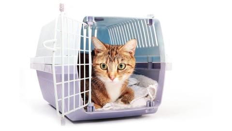 Il gatto in viaggio – Cose di Casa