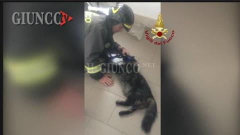 Gatto intossicato dal fumo: i Vigili del fuoco lo salvano con il … – IlGiunco.net
