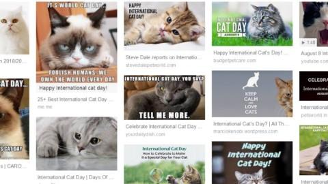 Oggi è la giornata mondiale del gatto, l'animale più social – Il Sole 24 ORE