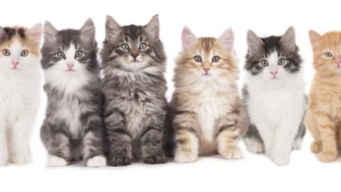 Giornata mondiale del gatto: sui social impazza l'hashtag #CatDay – Si24 – Il vostro sito quotidiano