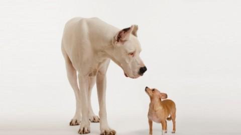Giornata Mondiale del Cane: 10 libri da leggere per chi ama i cani – Sololibri.net