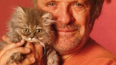 """Oggi """"giornata dei gatti"""": solo il Comune non li ama… – NotiziaOggi Vercelli"""