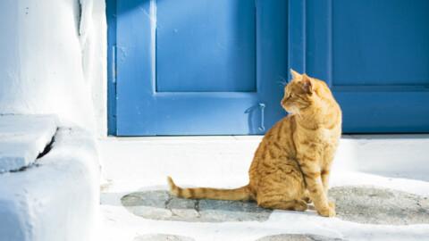AAA cercasi amante dei gatti che passi il tempo con 55 felini (in un … – L'HuffPost