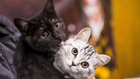 E' la giornata del gatto, Micio spopola sui social – Alto Adige