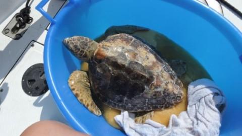 La tartaruga Chiara è tornata a nuotare – la Nuova di Venezia