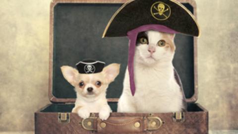 Piratinviaggio: ecco i suggerimenti per le vacanze con gli amici a 4 … – Travelnostop.com