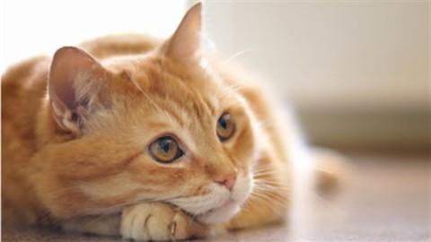 Giornata del gatto: i benefici che porta in famiglia – Corriere Nazionale