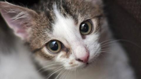 Seviziati e ammazzati: lecchese indagata per uccisione di gatti – Giornale di Lecco