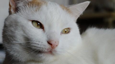 La Nuova Zelanda vuole vietare i gatti come animali domestici – Giornalettismo.com