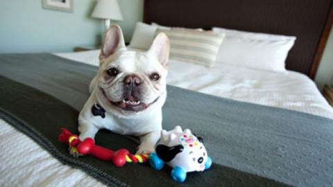 In aumento gli alberghi pet-friendly in tutta la Penisola e nel mondo – Travelnostop.com