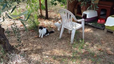 Uno spazio dedicato ai gatti in difficoltà, alle porte di Bari la prima … – BariViva