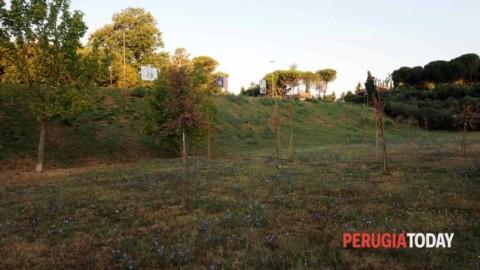 INVIATO CITTADINO Parco dei Rimbocchi, tra seccume di alberi e … – PerugiaToday