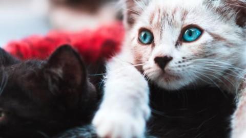 Parla la presunta killer di gatti «Tramutata in mostro, ma non li ho … – L'Eco di Bergamo