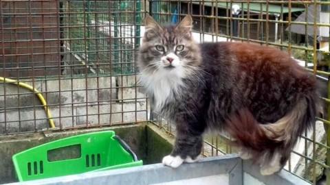 """Prince, gatto """"regale"""" ospitato dall'oasi Moretti cerca una famiglia … – Genova24.it"""