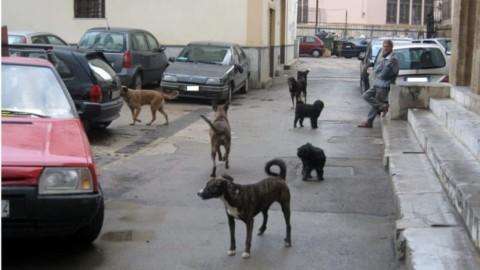 Disegno di legge contro i randagi: mappatura genetica dei cani e … – PalermoToday