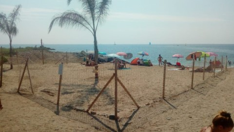 Arma di Taggia: la spiaggia per cani è amata anche da chi non ha il … – SanremoNews.it
