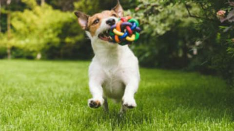 Guida al mondo dei giochi per cani: giochi di agility e intelligenza – TuttoGreen