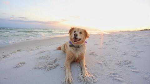 Dog beach: le spiagge per cani nel Lazio – Moondo (Blog)