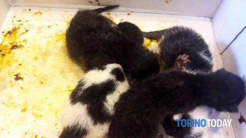 Cuccioli di gatto chiusi in un sacchetto e gettati nel bidone dell … – TorinoToday