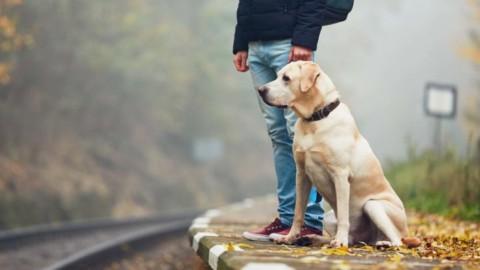 In viaggio con il cane. Consigli per treno, aereo, carpooling e pullman – QN Motori