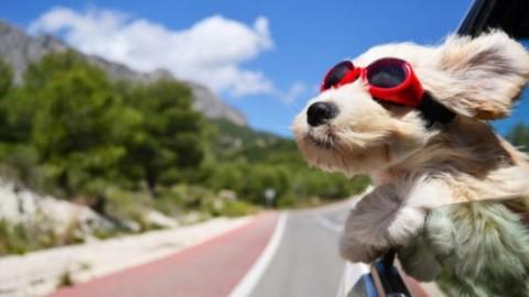 Vacanze con il cane, come organizzarle al meglio? – ZON.it
