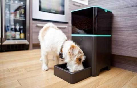 Distributore automatico di cibo per cani, a cosa serve? – Bsnews.it