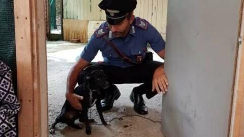Cattolica, cucciolo di cane in catene per un mese senza cibo né acqua – Il Resto del Carlino