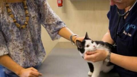 Spari in paese contro un gatto. Allarme a Piano del Quercione – La Nazione
