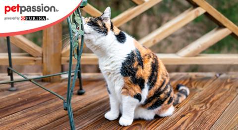 Perché il gatto marca il territorio? – Petpassion.tv