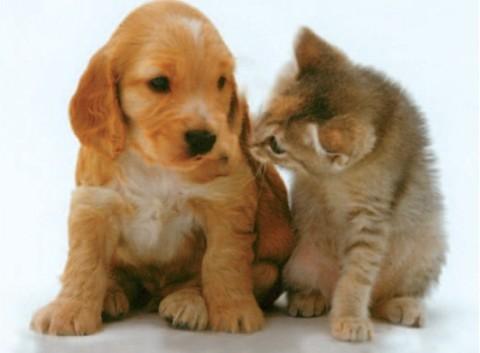 Mangiare cani e gatti? In Italia non è proibito – il Giornale