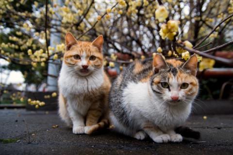 Illegittimo vietare di sfamare animali, Sindaco di Cocullo ritiri ordinanza affama gatti